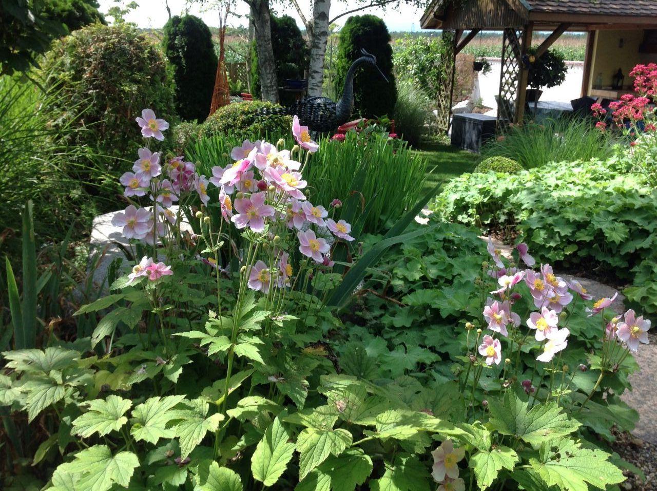 D coration plantes en fleur taille des thyuas haut rhin - Taille des hortensias fleurs ...