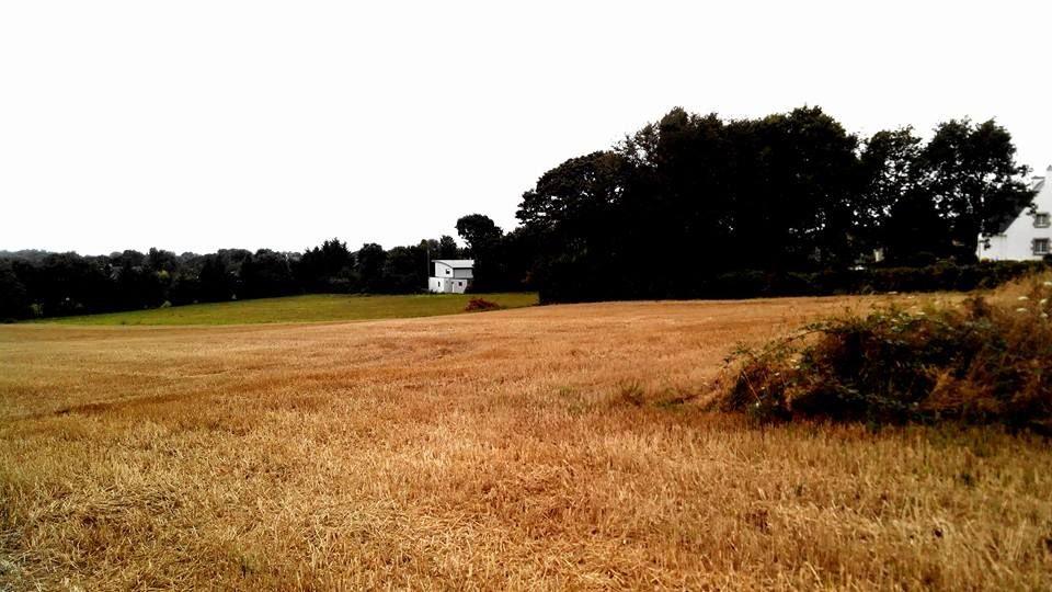 Terrain tout juste après la récolte