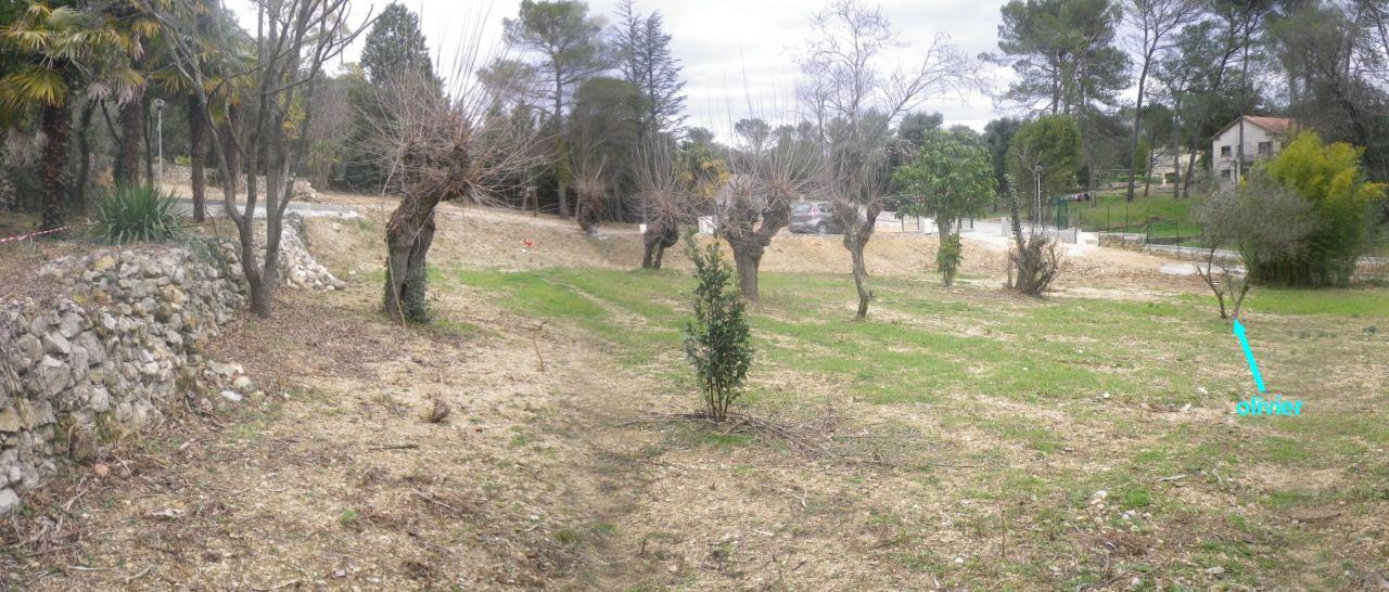 Notre terrain: vue depuis le Sud-Ouest. Quelques vieux mûriers (il faudra en déplacer 2), laurier, olivier, cerisier, palmiers, bambous. Des murets de pierre sèche en bordure.
