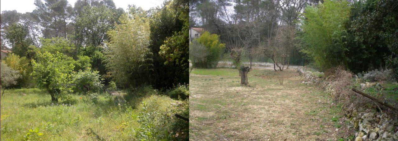 Même point de vue à 2 mois d'intervalle: pousse de printemps!
