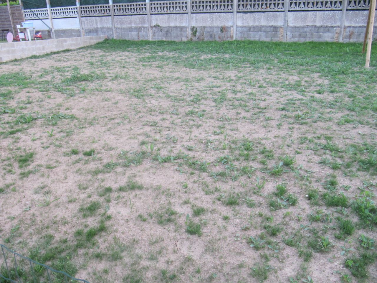pelouse 1 mois après