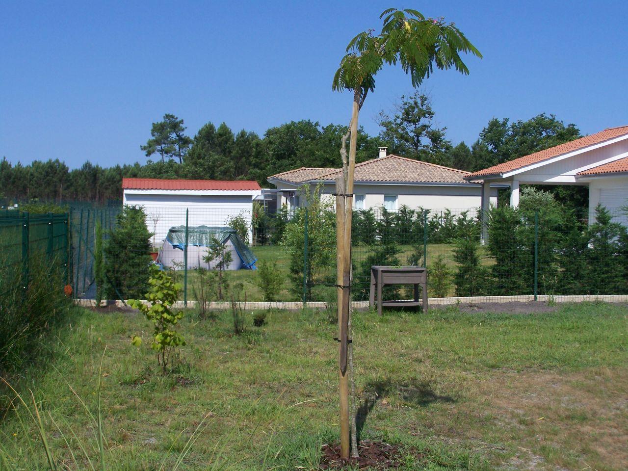 Probl me sur plantation arbres suite aux replantations for Entretien jardin hourtin