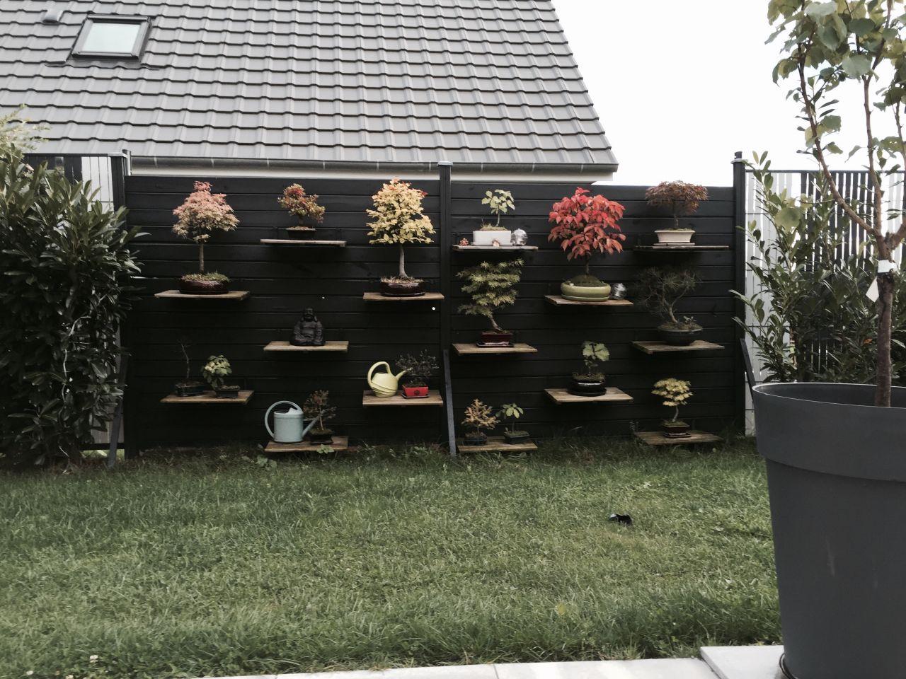Mur de bonsaïs peint en ral 7016....