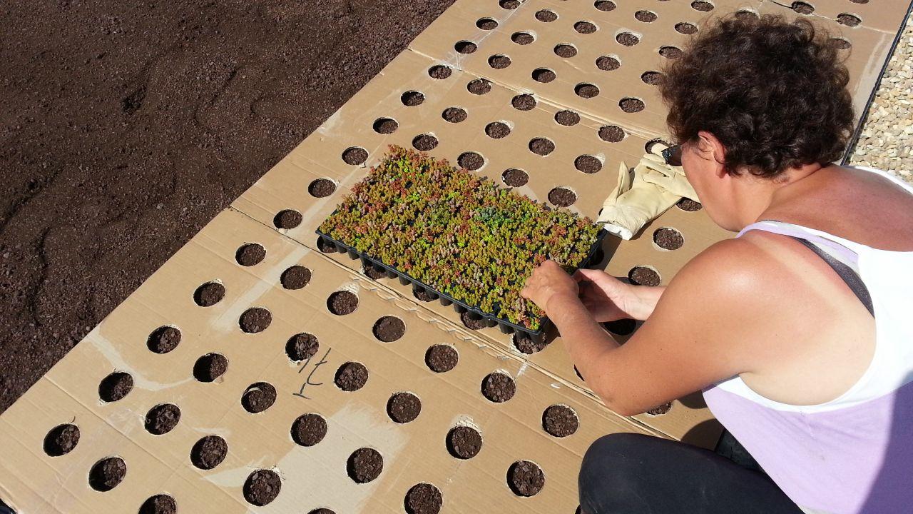 Plantation toiture végétalisé