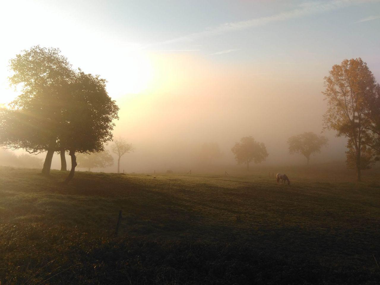 Photo à 7h30 de notre jardin ... que dire ...