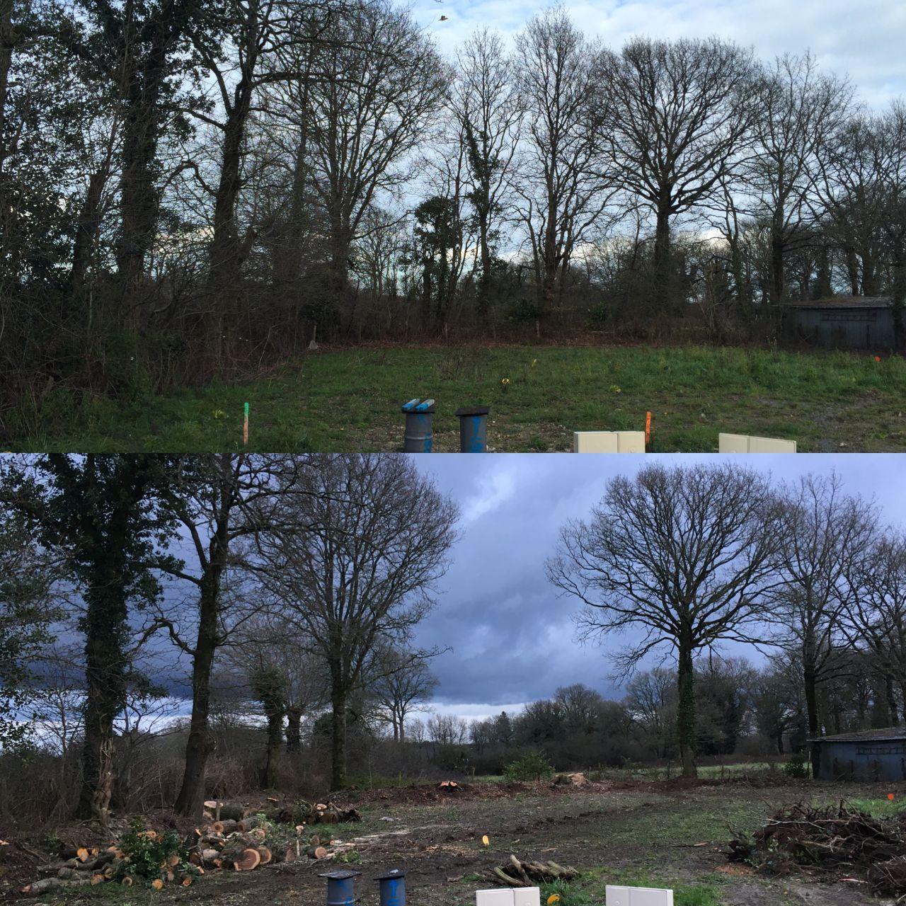 Abattage et élagage des arbres