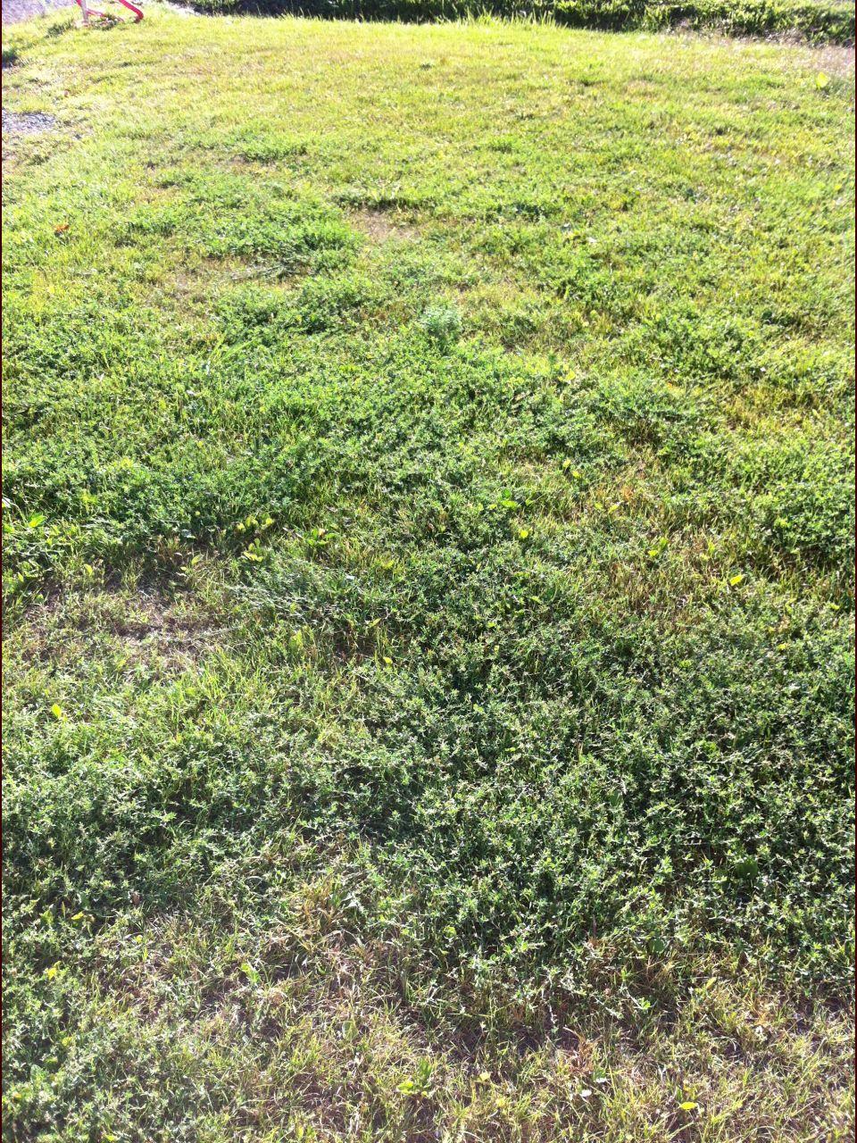 Herbe envhaissante dans une nouvele pelouse 6 messages for Construire une lucarne rampante