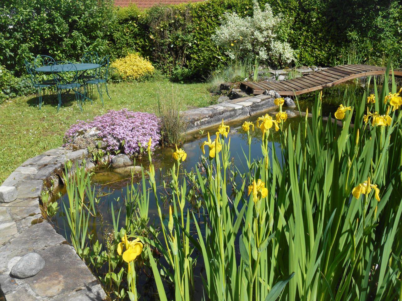 Les iris sont plantés dans des paniers immergés.