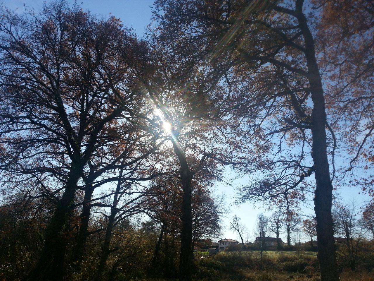 soleil de novembre