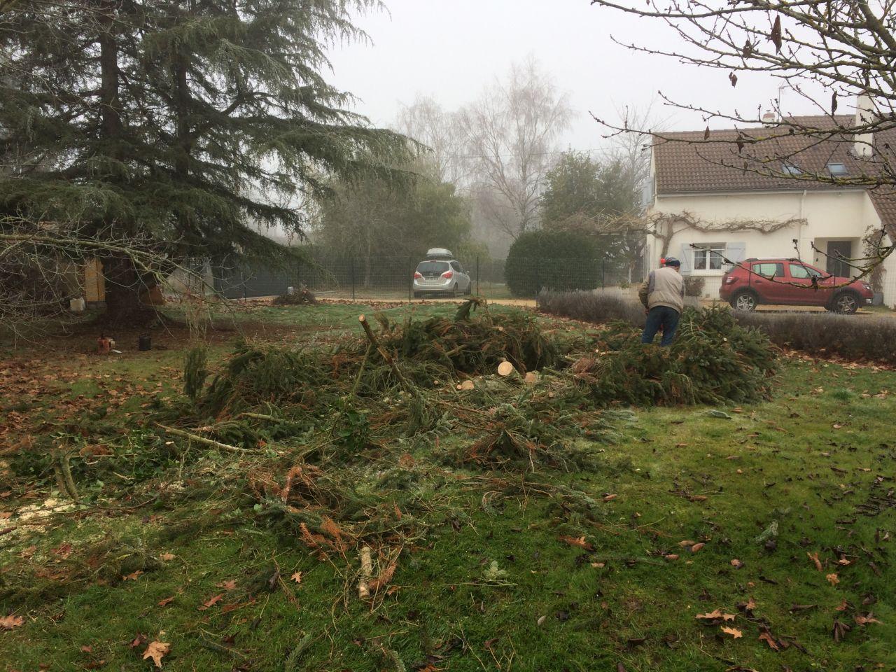 Coupe des arbres sur terrain