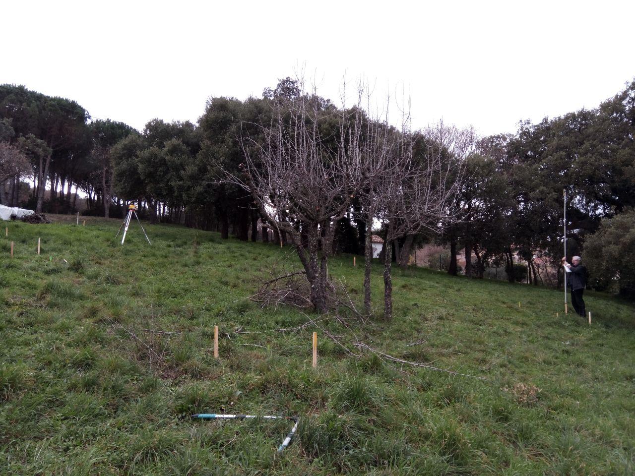 Répartition des tâches : moi je taille les arbres, mon père calcule le niveau des piquets préalablement posés.