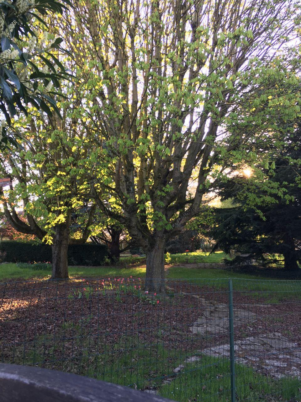 Vue du parc de l'ancienne maison avant création du lotissement