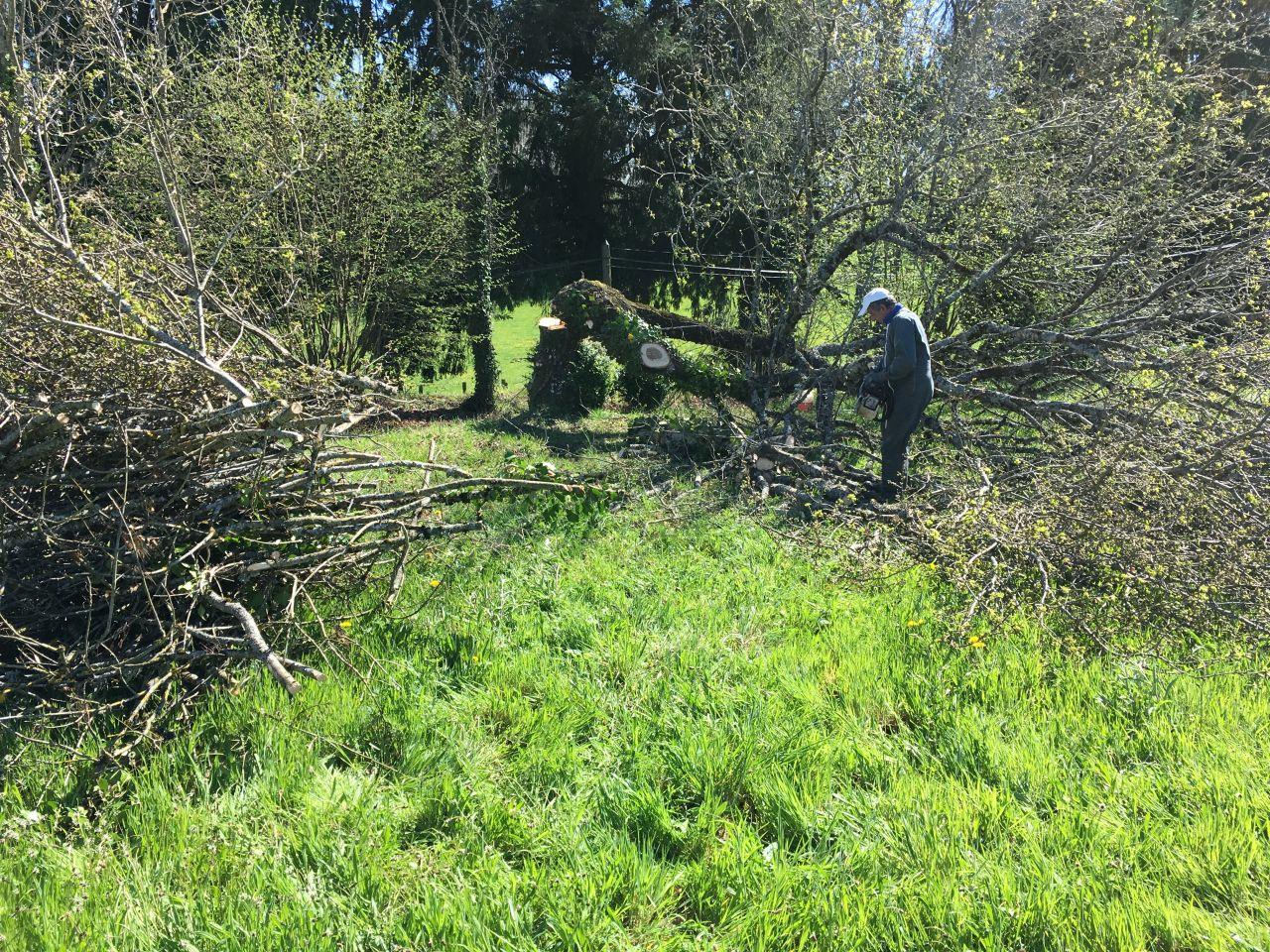 Tronçonnage des arbres