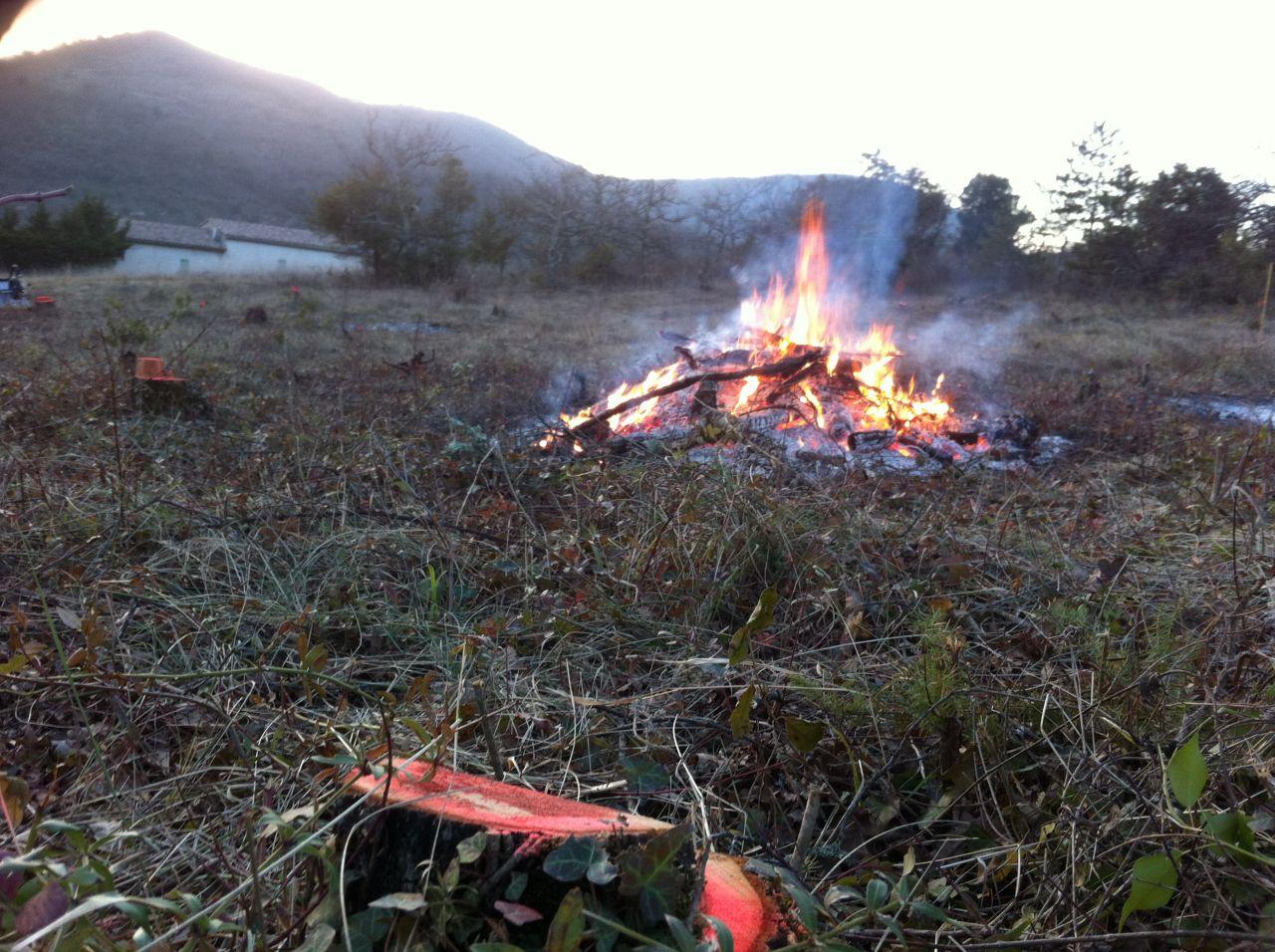 Petit feu après l'abattage des derniers arbres