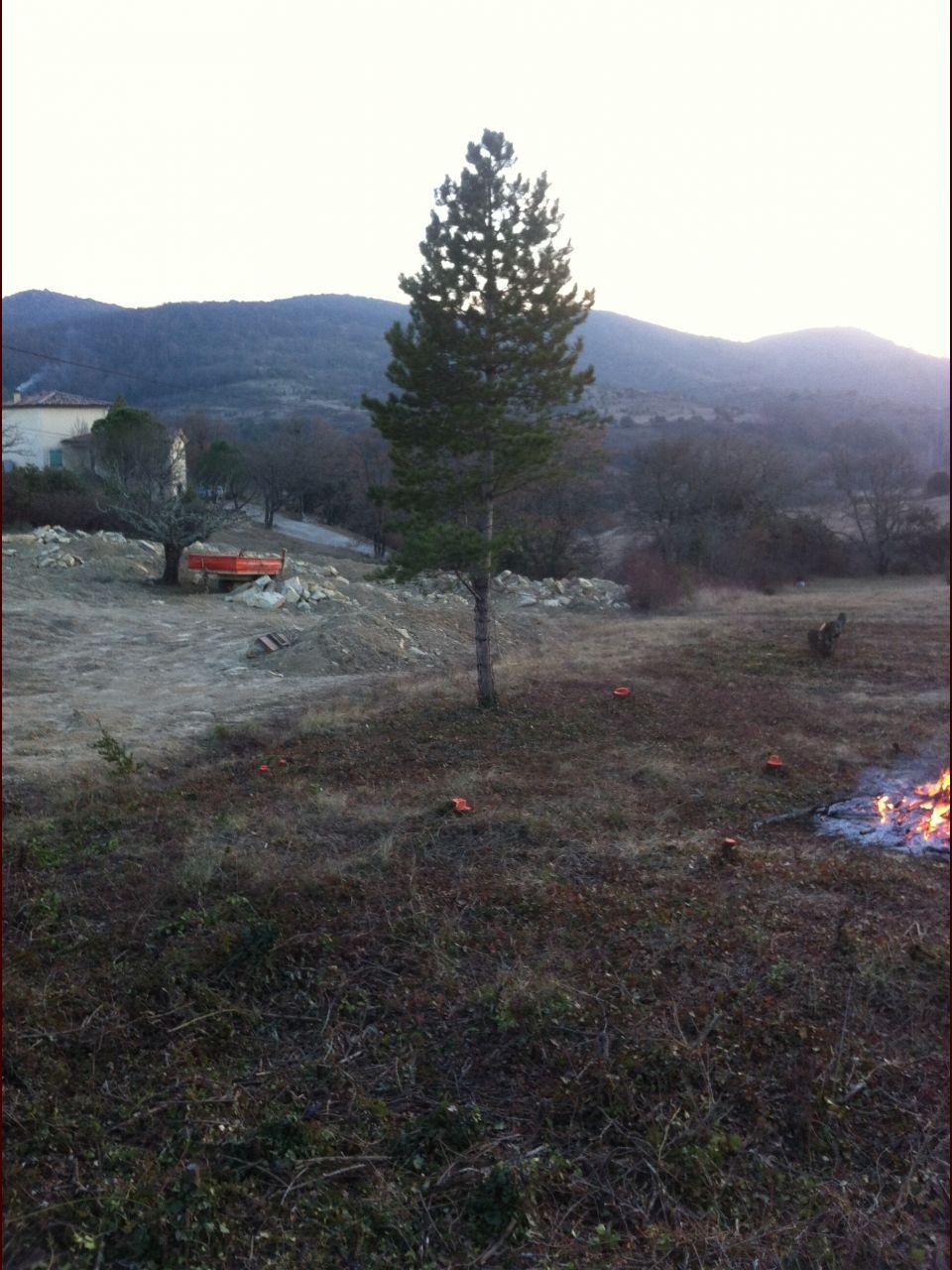Le survivant ! Le seul arbre que nous avons laissé.