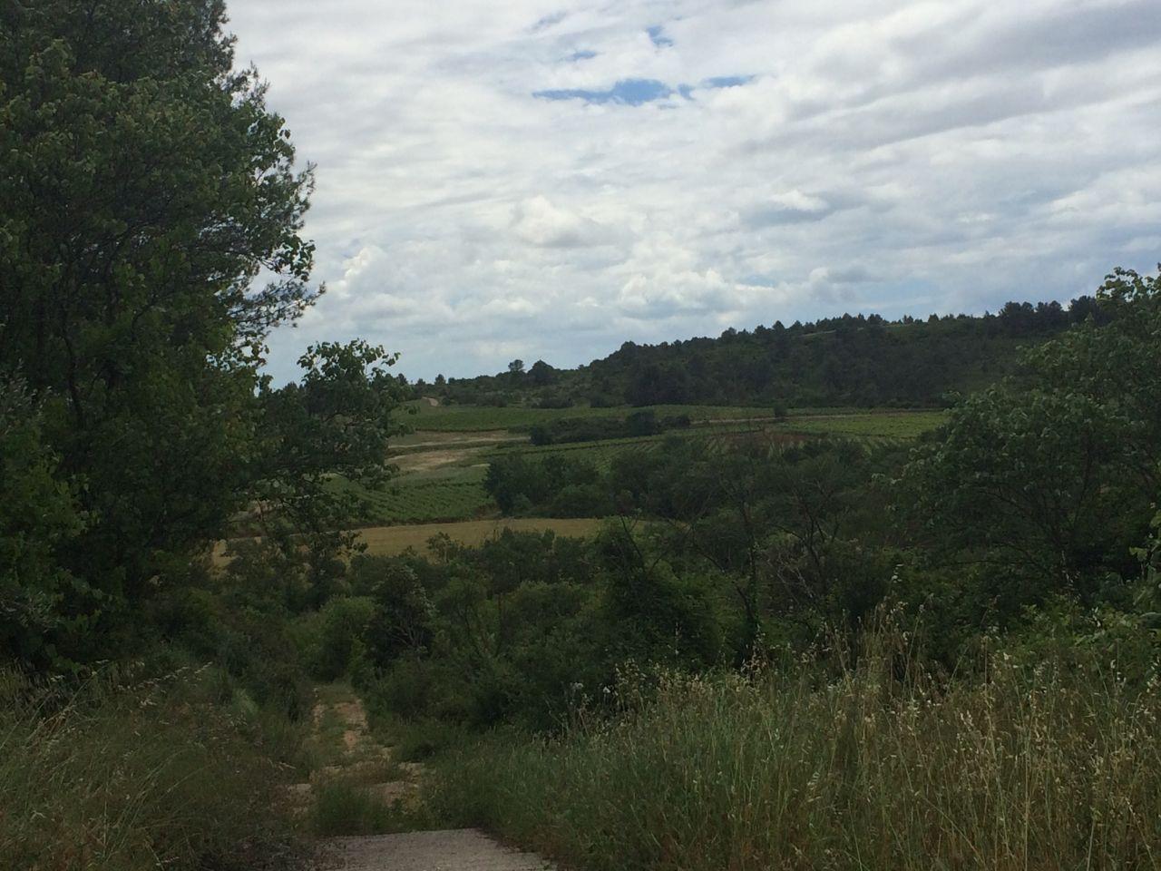 vue sur les vignes depuis le bas du lotissement.