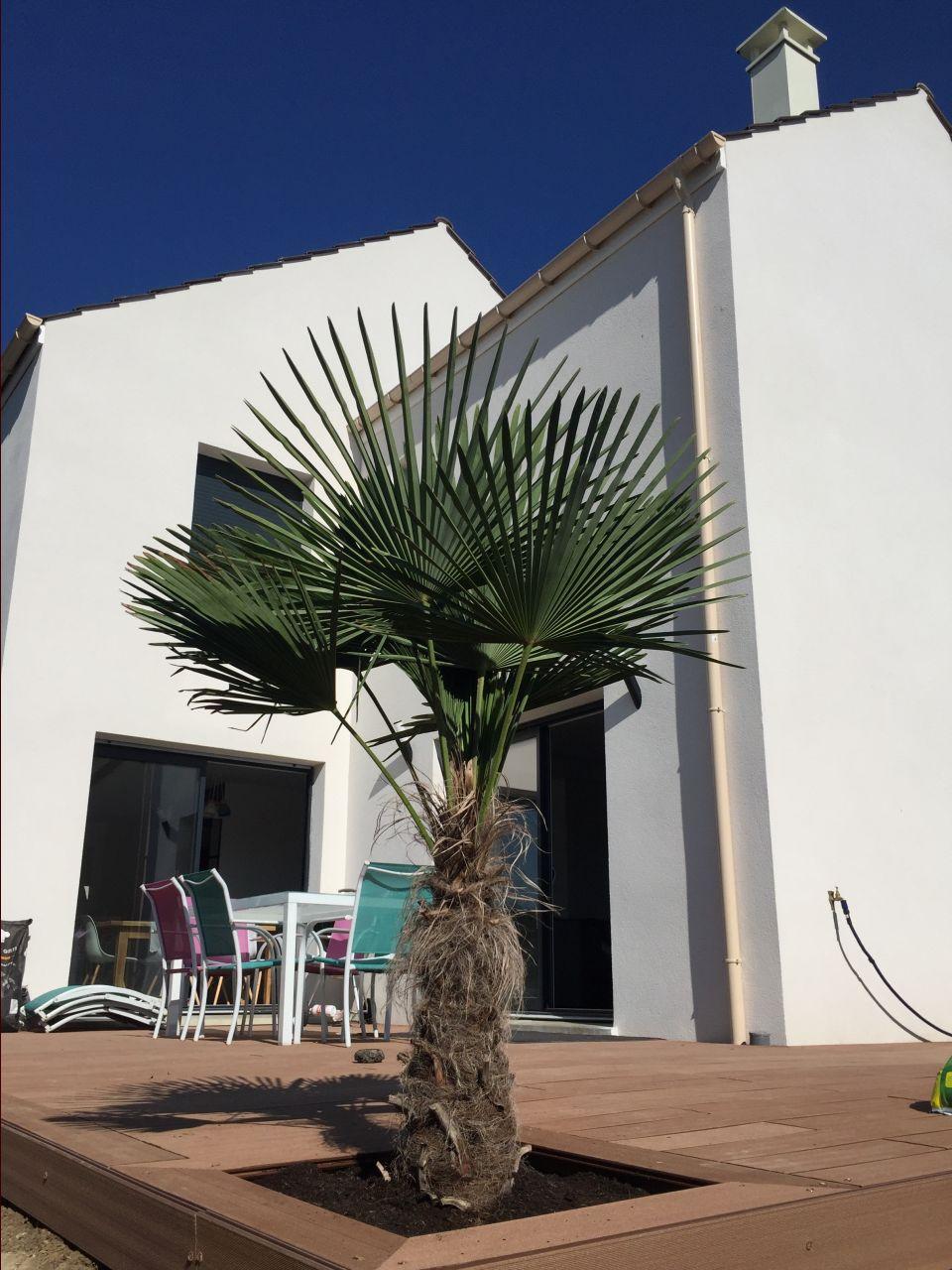 Palmier terrasse