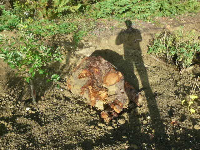 Souche d'arbre qui dépasse