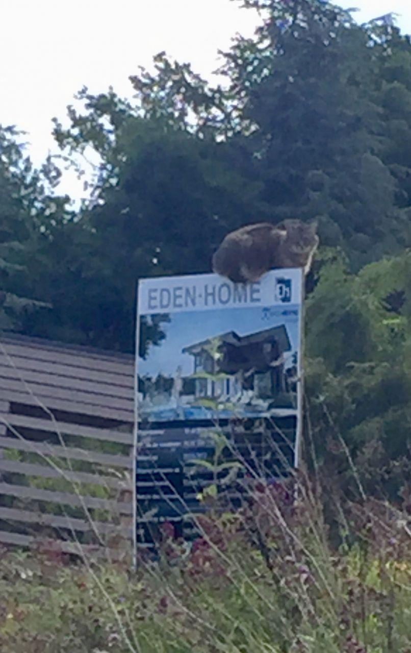 Même les chats choisissent Eden Home