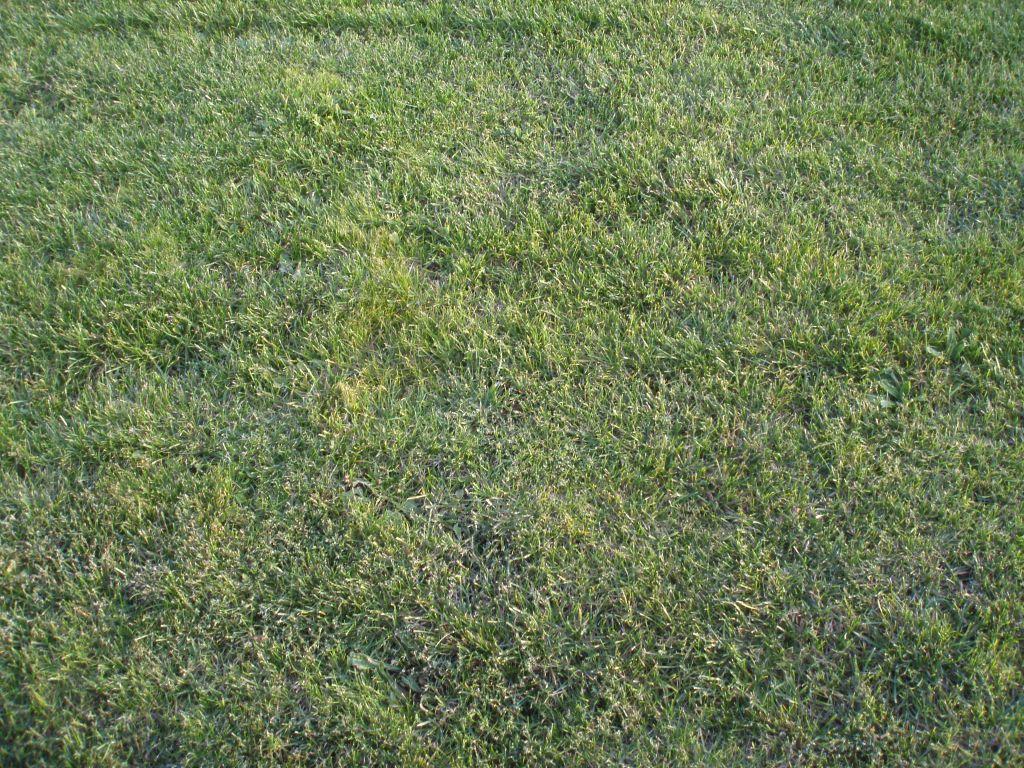 un petit point sur la pelouse ploudalmezeau finistere. Black Bedroom Furniture Sets. Home Design Ideas