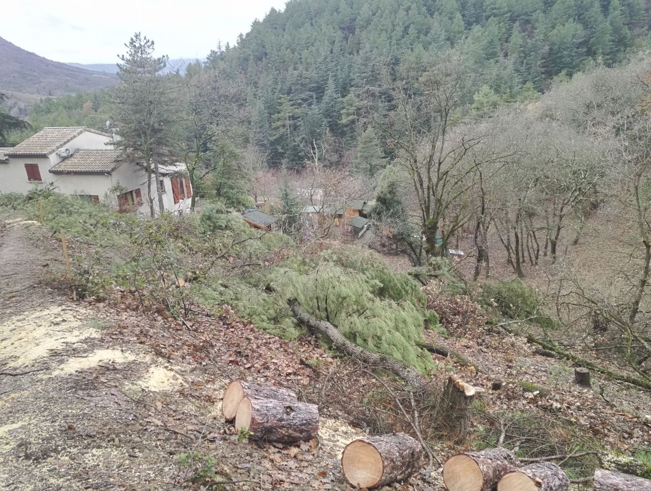 abatage des arbres