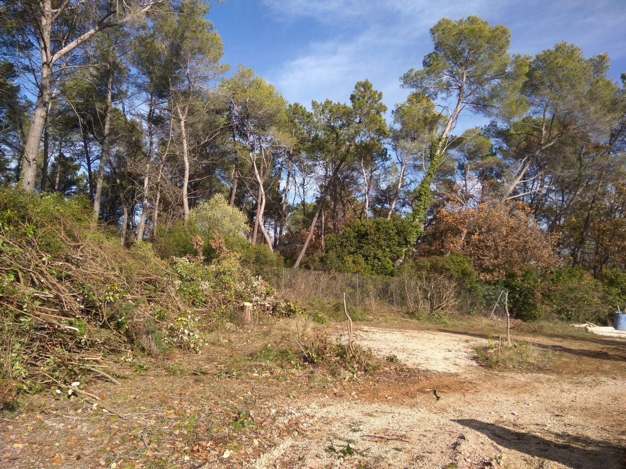 Nettoyage du terrain et abattage d'arbre