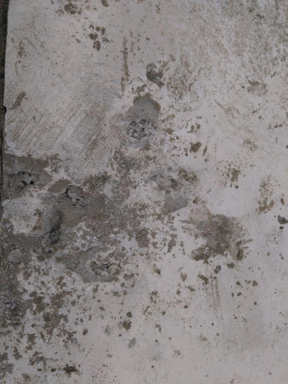 Terrasse abimée par un chien ou un chat