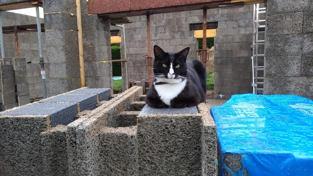 Mon second chat qui monte la garde du chantier