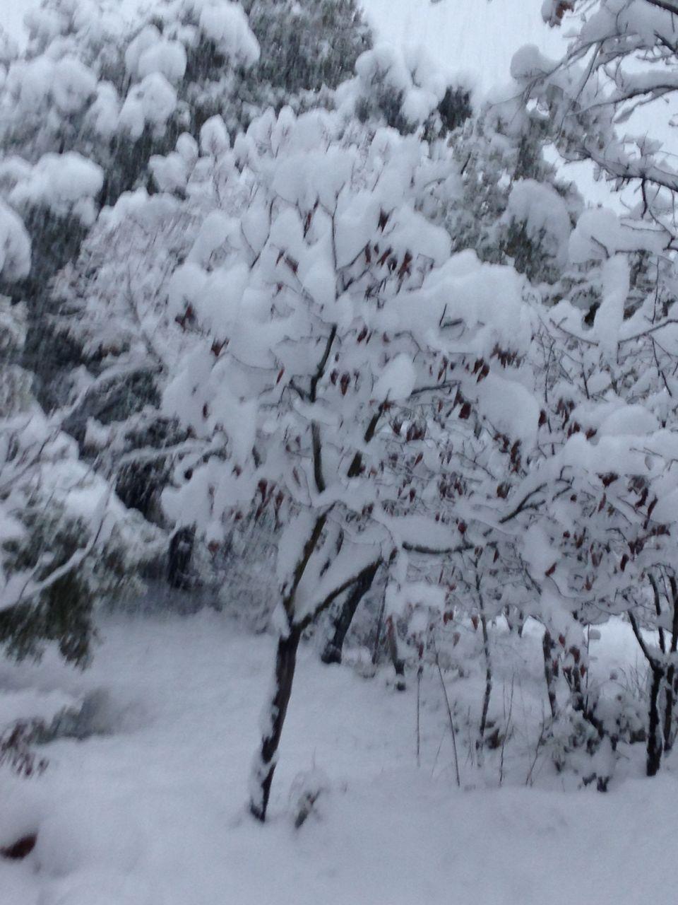 Le var sous la neige ... déjà 3 fois cet hivers du jamais vu ... c'est beau mais c'est FROID !!!