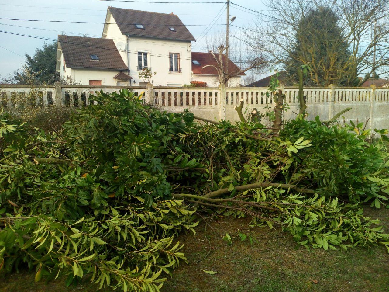 un arbre qui empiétait sur l'emplacement de la futur construction a été élagué