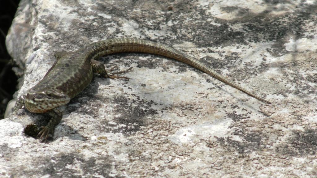 C?est beau la nature. <br /> L?année dernière j?ai passé la semaine à Privas avec un scorpion noir de 7 à 8 cm dans la chambre. <br /> Depuis, ma femme en voit partout.