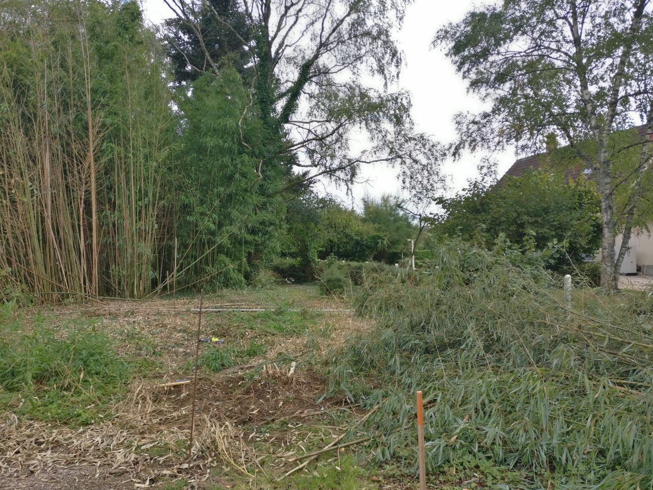 on continue de déblayer les bambous