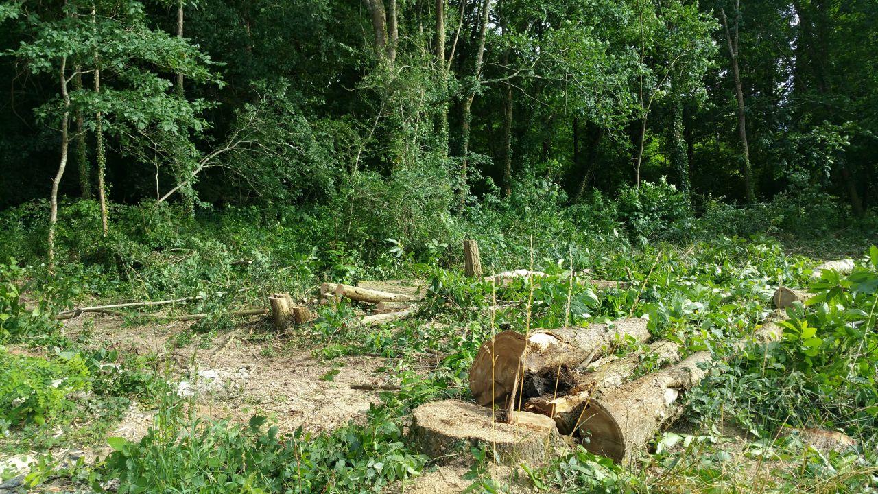 Abbattage des arbres