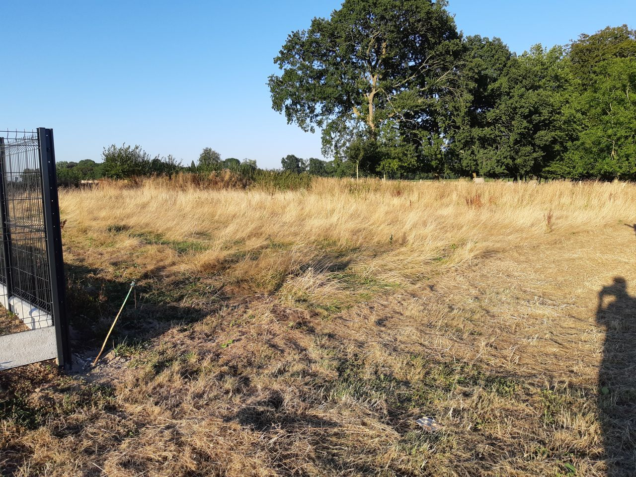 le terrain cet été avec les hautes herbes et le talus caché en face sur la gauche