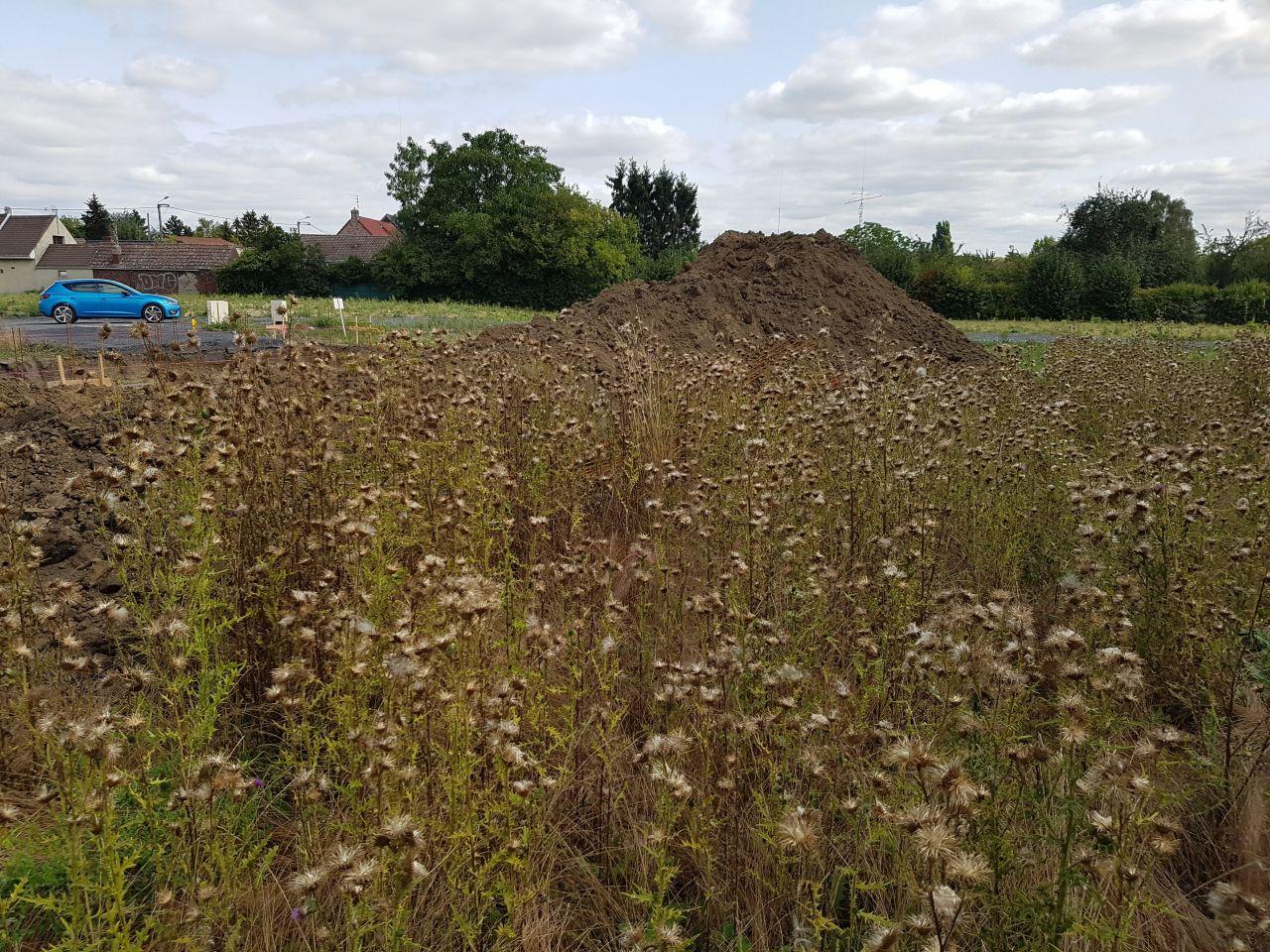 Chardons et autres mauvaises herbes dans le fond du terrain avant le fossé