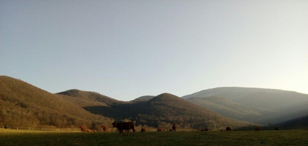 A 17h, les vaches arrivent derrière le terrain!