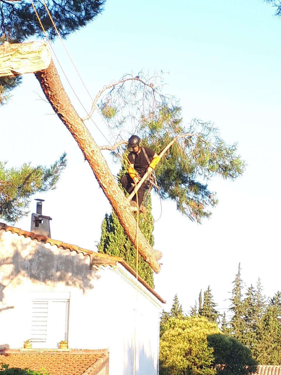 Élagage - Les funambules des arbre
