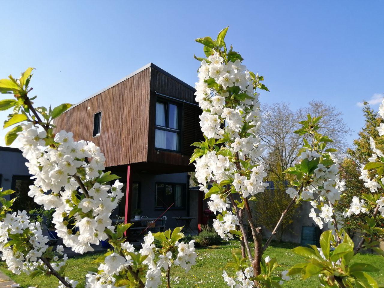 Vue du cerisier en fleurs