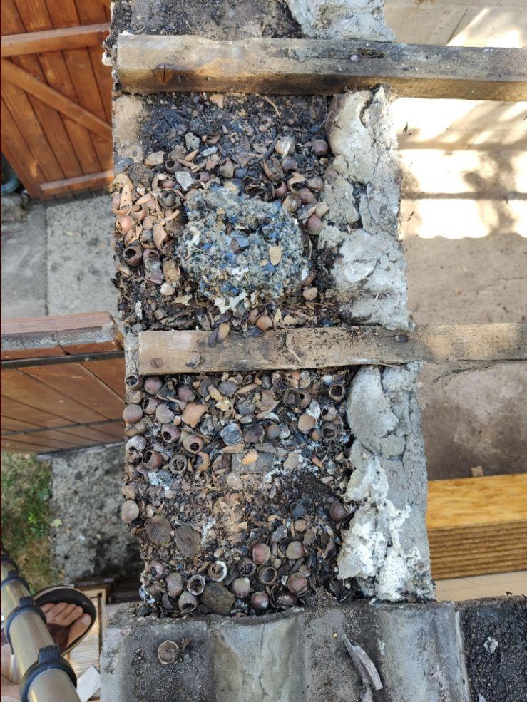 nid d'écureuil sous toiture