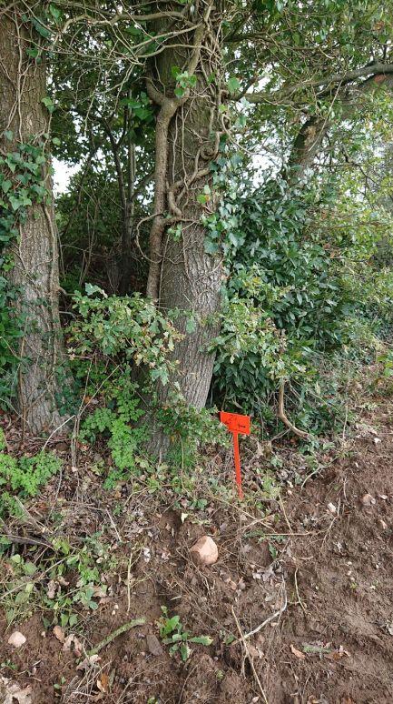 C'était normalement deux arbres, on voit clairement que non ! Et on aperçoit la borne qui nous indique que le terrain va 4m plus loin soit derrière le talus.