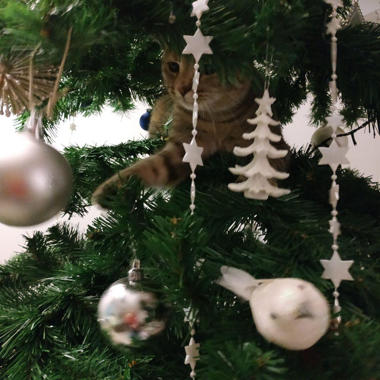 Chat perché de Noël