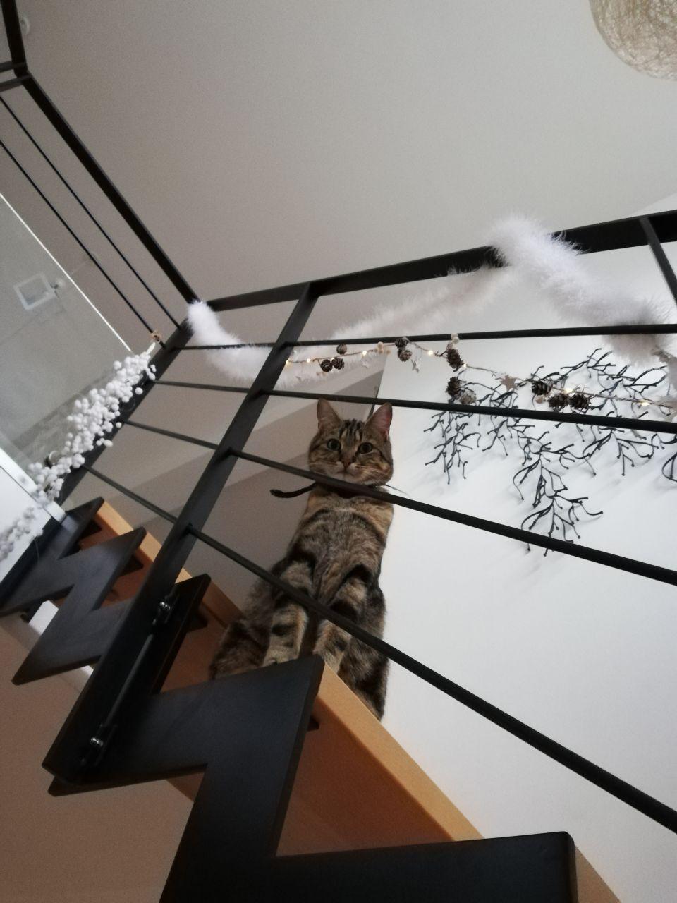 Escalier décoré et chat innocent