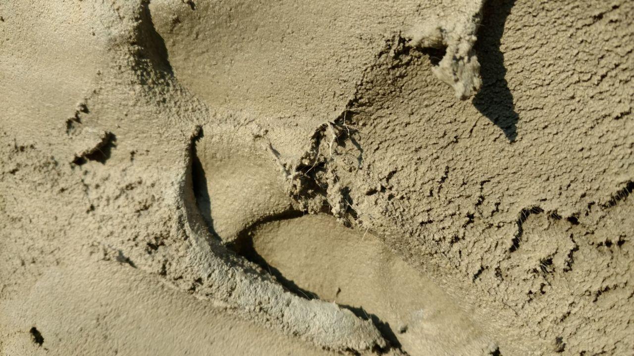 Aspect d'un mortier de réparation : on voit nettement les fibres présentes dans le mortier.
