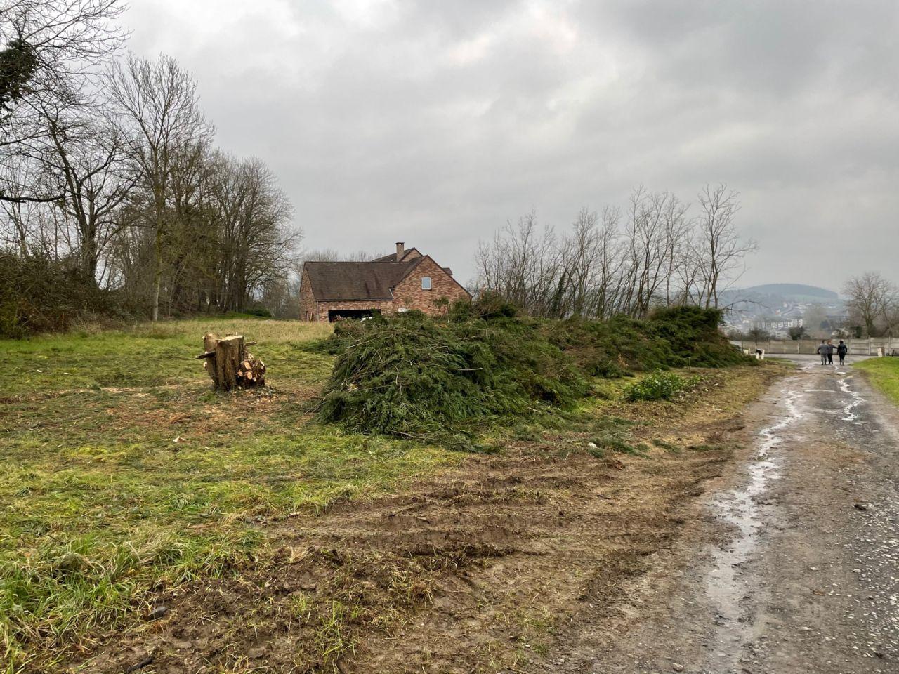 Coupe des grands arbres sur le terrain