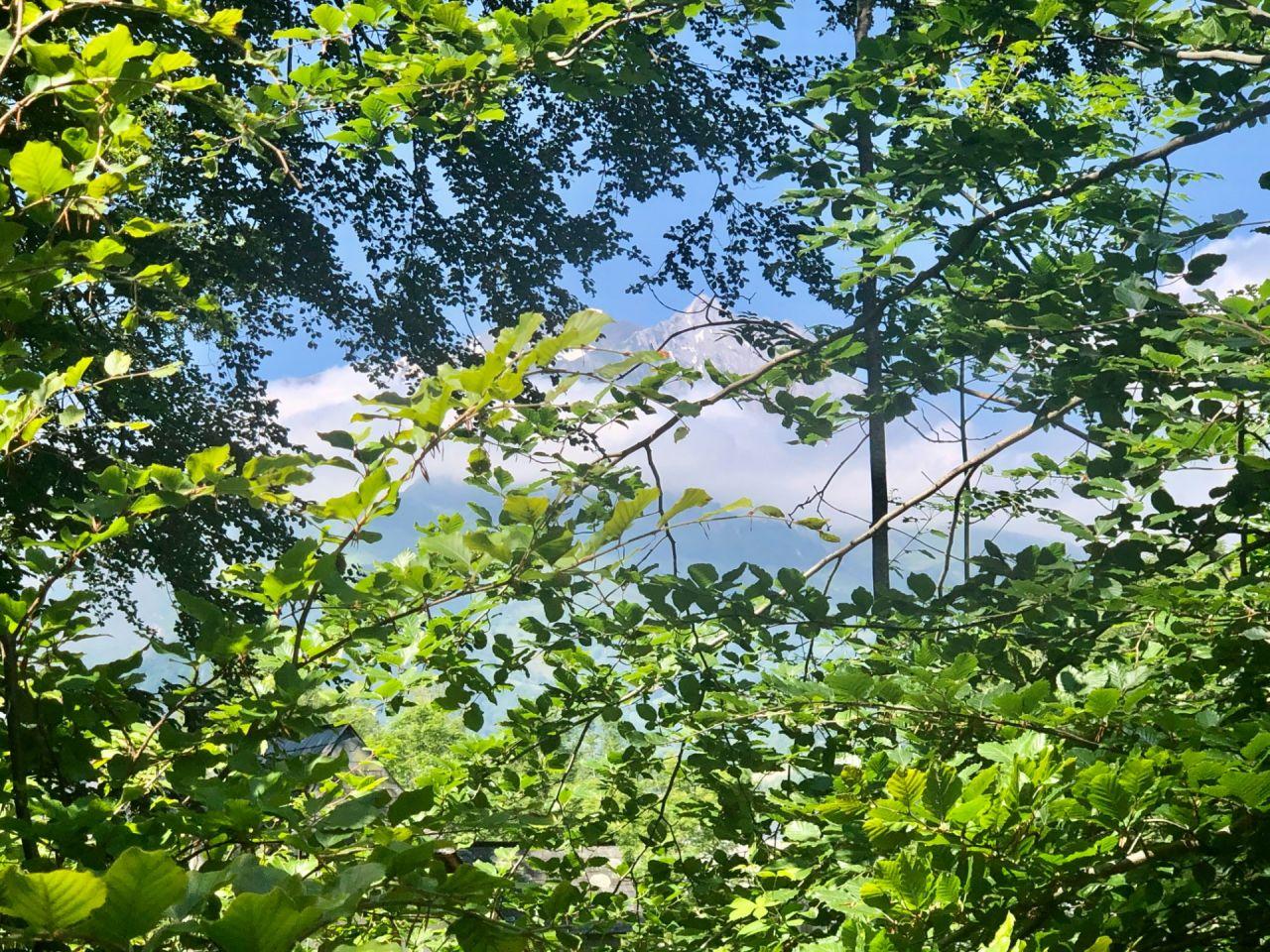 Mais... on peut apercevoir les Gabizos à travers les arbres, l'emblème du Val d'Azun.