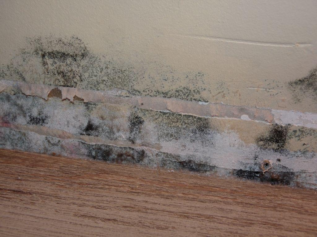 mur avec moisissure. free banque duimages vieux mur textur avec de