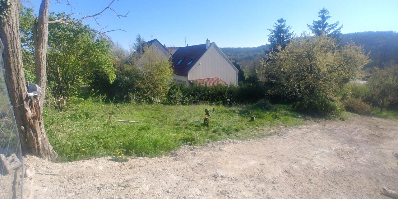 Terrain avec les arbres coupé