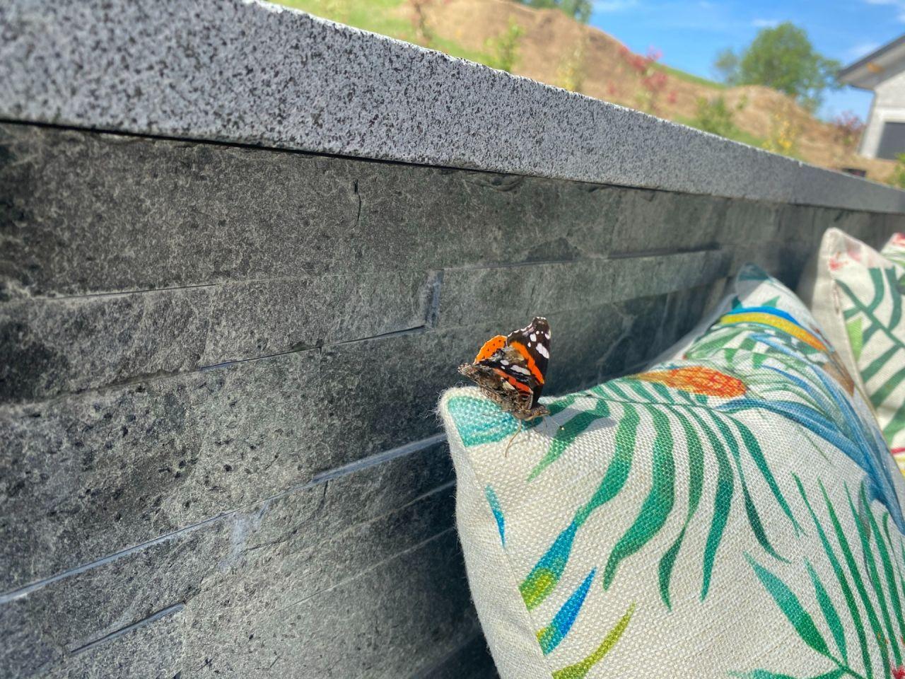 Papillon d'été