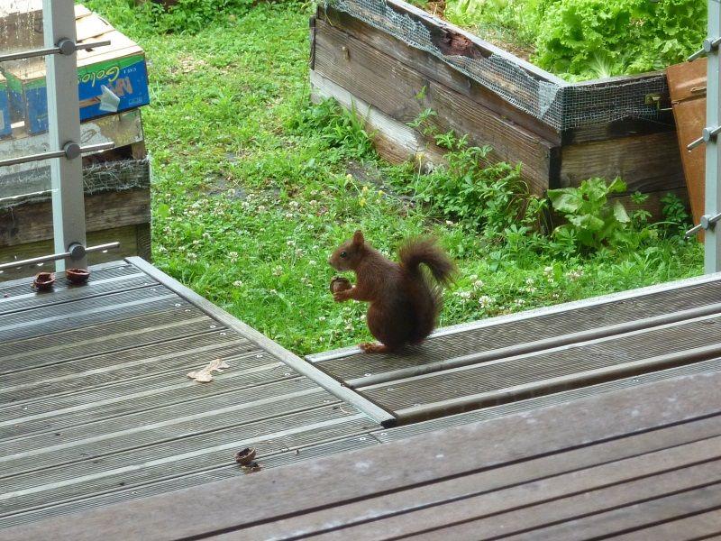 On a trouvé le voleur de noix