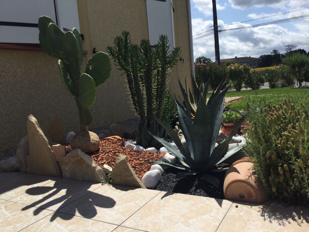 Enfin le beau temps est là et les cactus apprécient